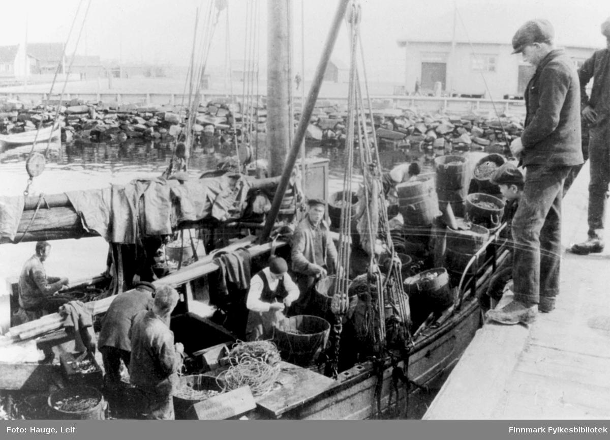 Vadsø: Fiskebåt ved kai. Lineegning ombord.