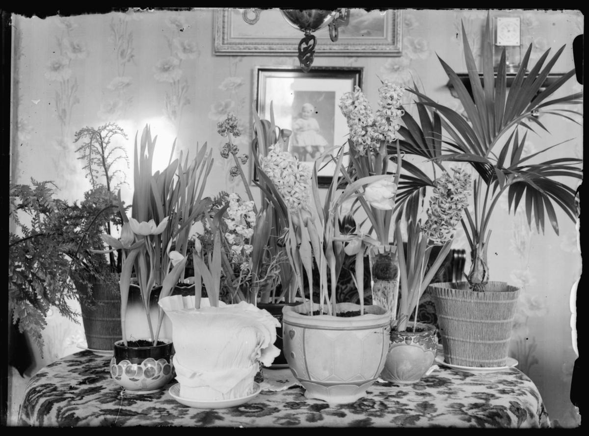 Blomster og potteplanter på bordet i stue i prestegården.