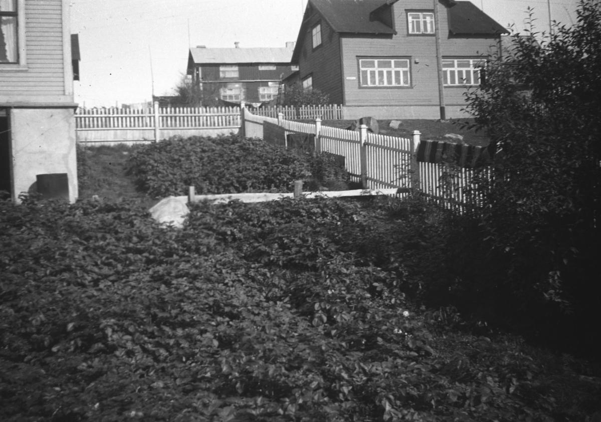 Familien Hauges hage i Nyborgveien i Vadsø under krigen. Fram t.o.m 1942 dyrket de poteter i hele hagen.