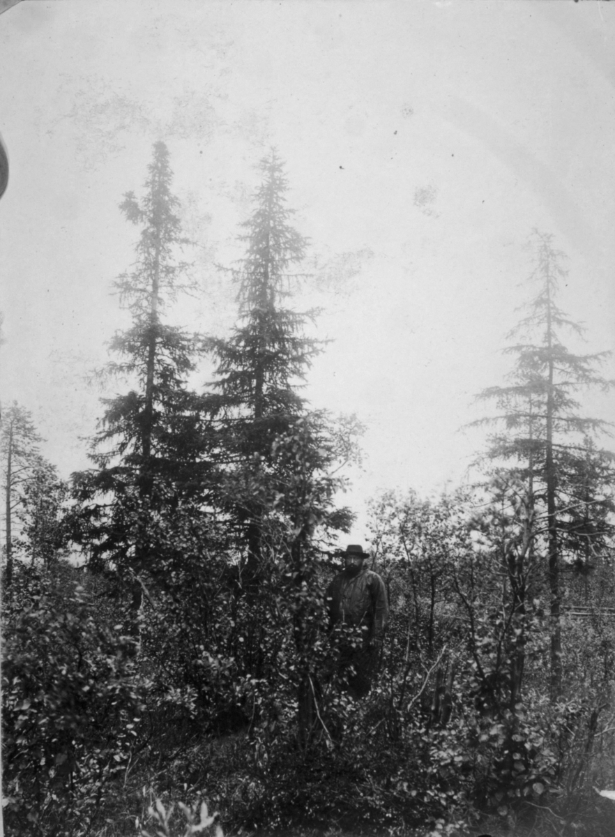En mann står i skogen med hatt og regnklær på. 21.08.1904