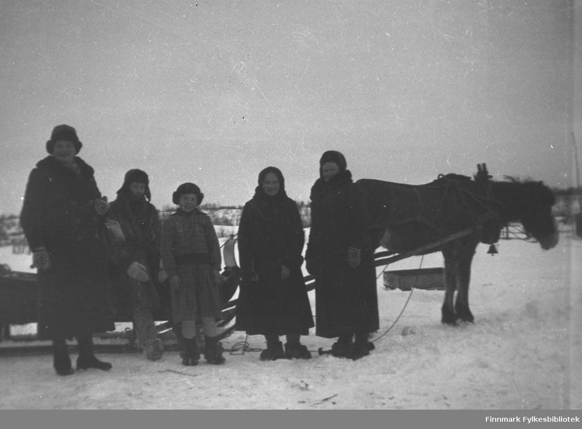 Hesten Borken forspent en slede, legg merke til bjella som henger fra seletøyet. Ved sleden står, fra venstre: Amanda Olsen Lie, Andreas Mikkola, ei jente med etternavn Labahå, Sandra Labahå og Kathinka Mikkola