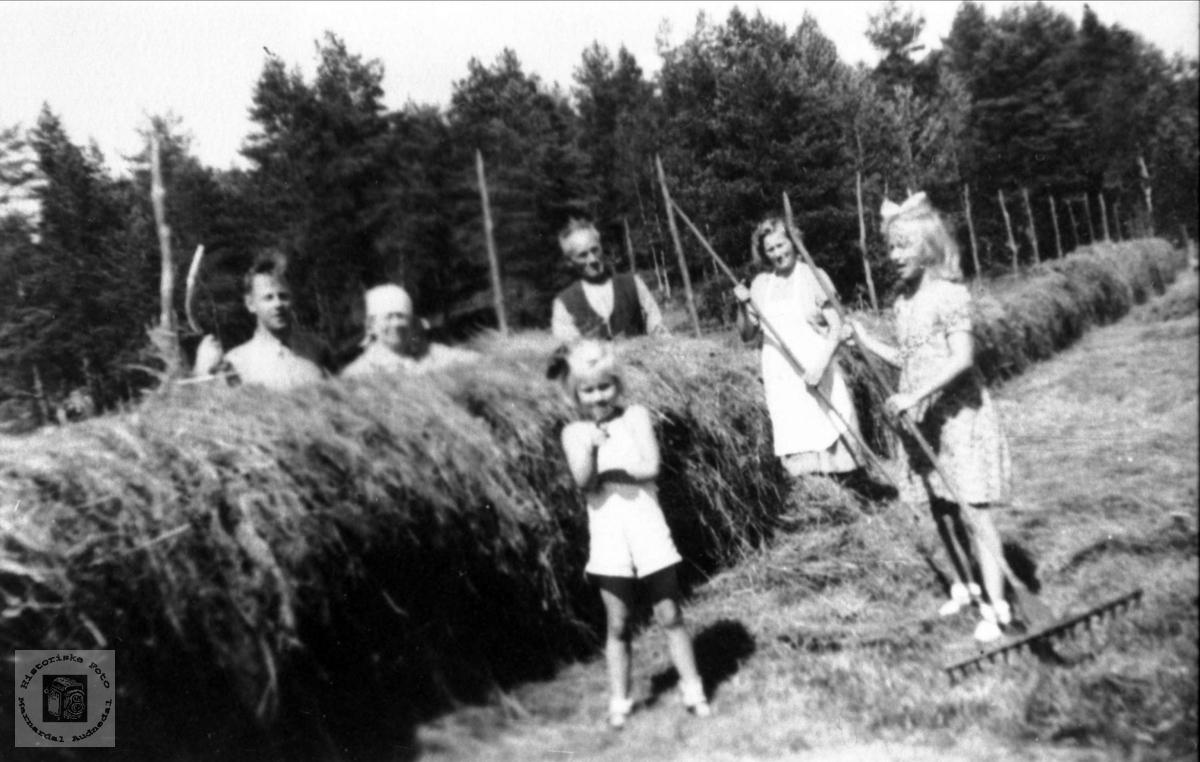 Haustonn på Nedre Haraldstad