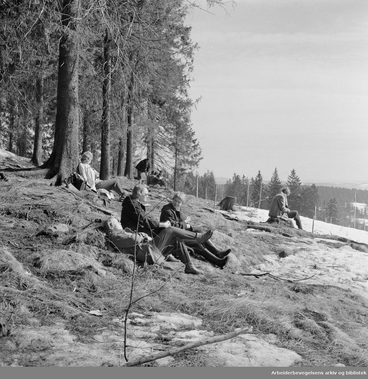Vårstemning i Nordmarka. April 1958.