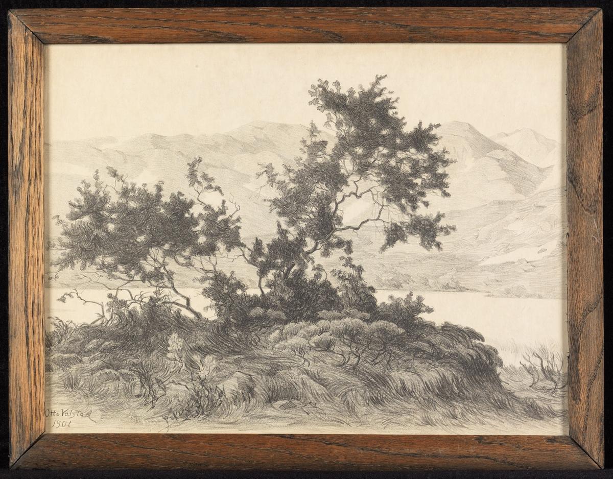 Landskap, i forgr. sprikete furuer, bak vann og fjell.