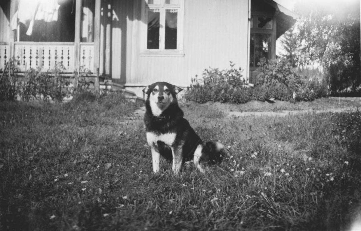 Hunden Pelle foran huset i Sydover.