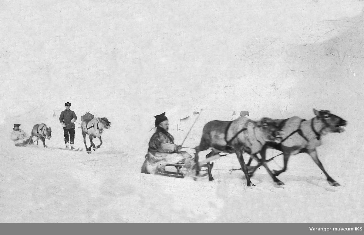 Reinsdyrløp i Vadsø. Kjelke med dobbeltspann, snørekjøring og pulk 1906.