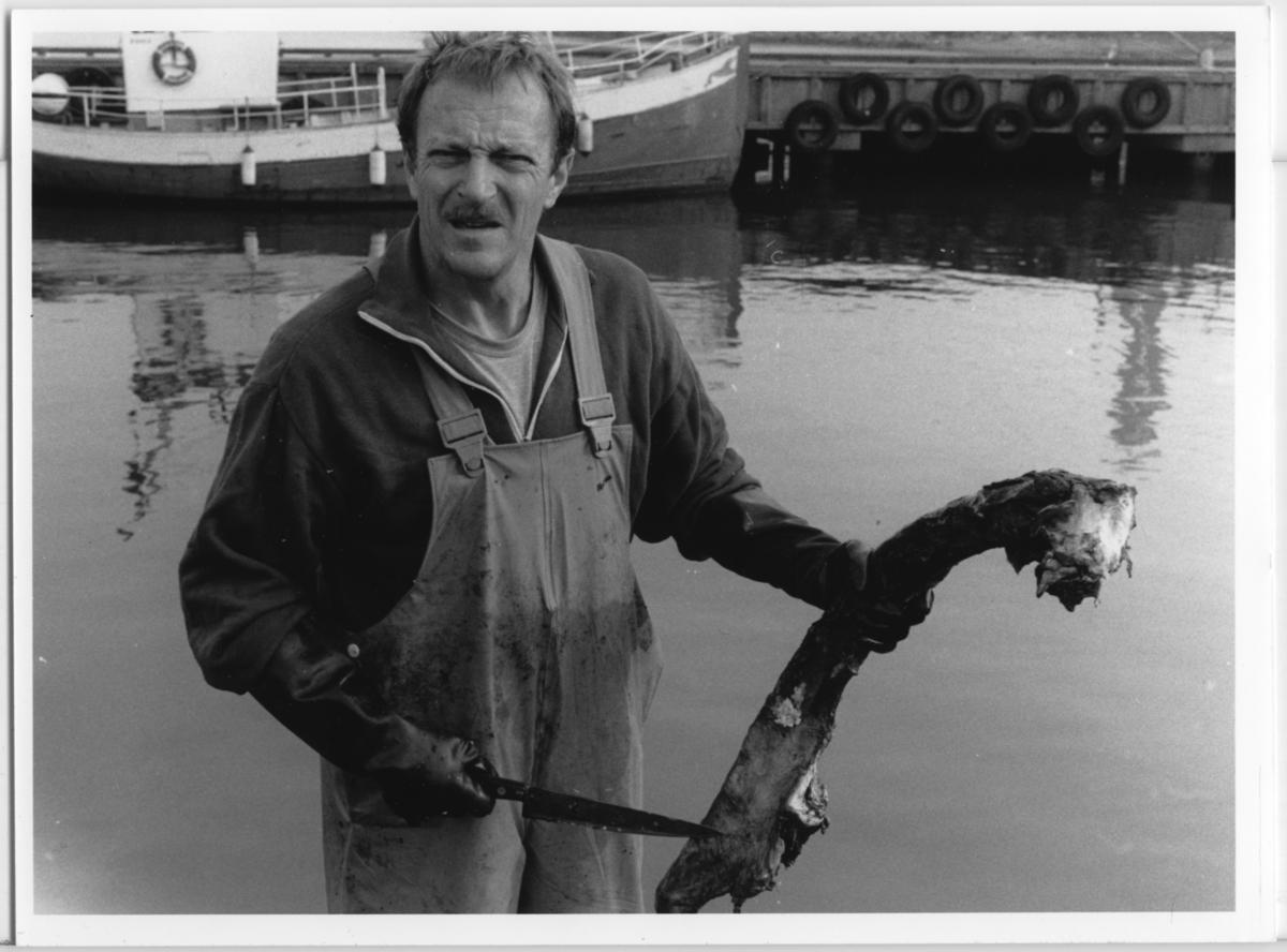 'Skelettering ::  :: Omhändertagandet av vikvalen, Nya Varvet. Flera personer från museet arbetar med valen: ::  :: Ulf Larsson håller kniv och kroppsdel av vikvalen. I bakgrunden en båt. ::  :: Ingår i serie med fotonr. 6729:1-18.'