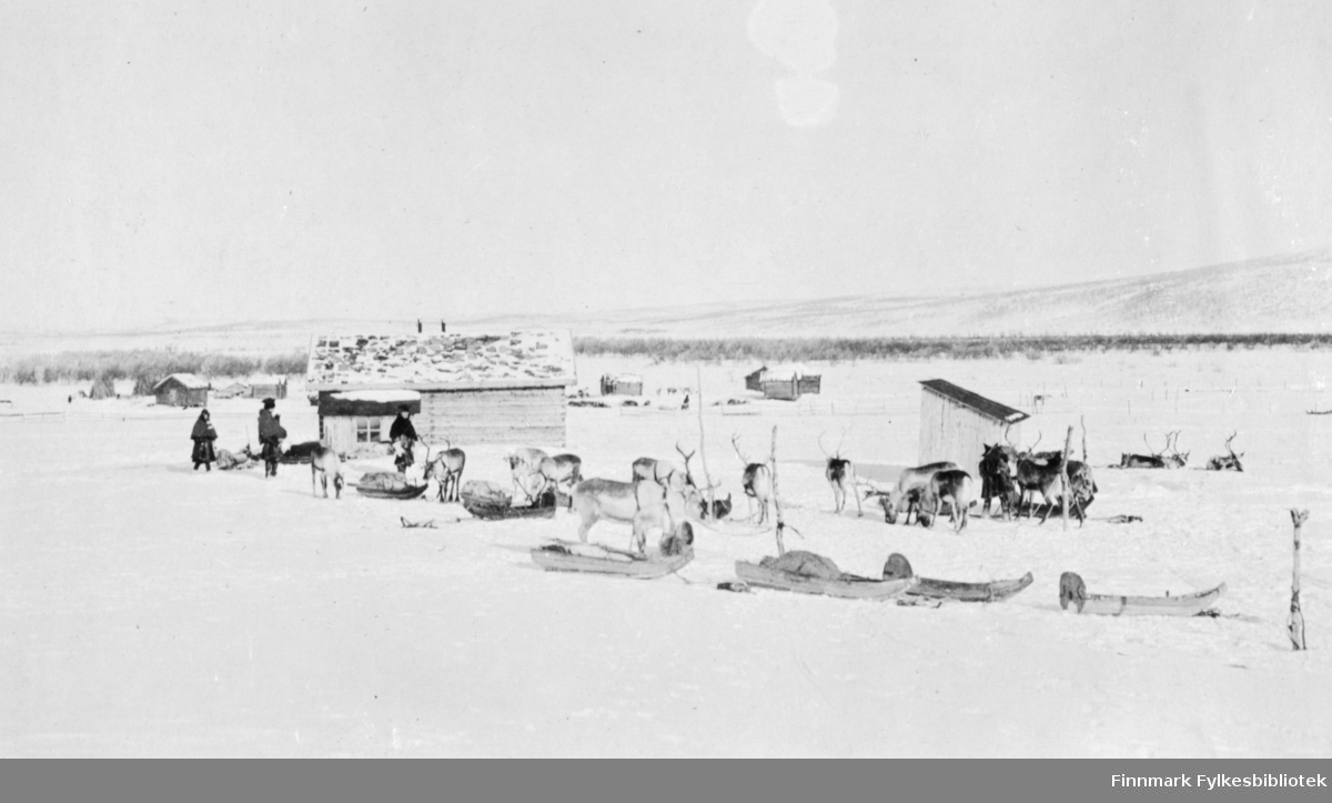 """""""Sjursjavre fjeldstue, mars 1917"""". Sjursjavre fjellstue, mars 1917. Samer i vinterlandskap med reinsdyr og sleder eller pulk. De står i nærheten av hus i et vinterlandskap. Noen rein står oppselet, andre ligger i snøen."""
