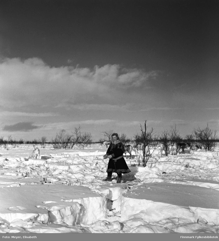 Inga Johansdatter Sara i samisk kofte, vinterstid på vidda. Reinsdyr i bakgrunnen.