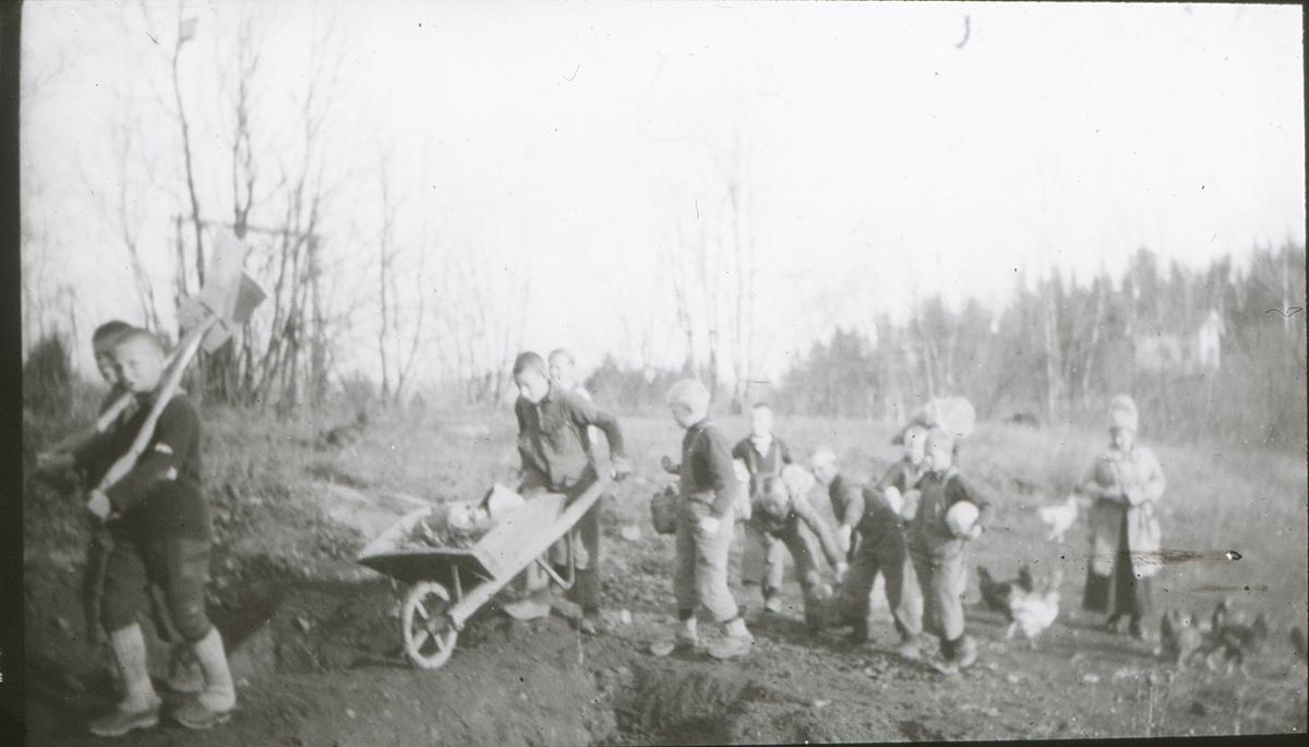 Gutter lemper stein på friluftsskolen Vangen. Med spader og trillebår. Høner i bakgrunnen.
