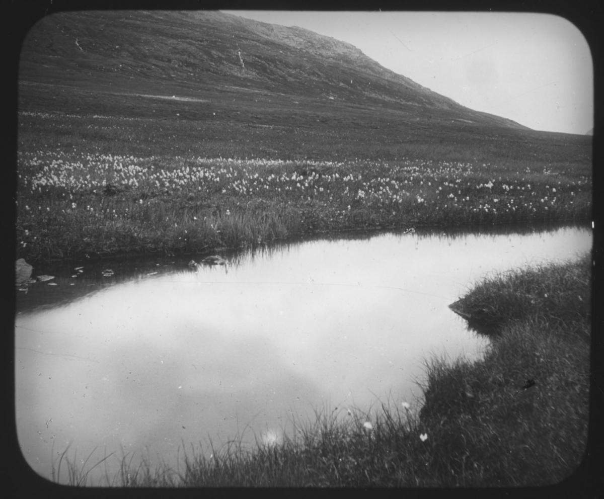 """""""Det Nordlige Norge. Serie 109. No. 10"""" står det på glassplaten. Landskapsbilde med en innsjø med myrull . Fjell i bakgrunnen. Det er sommer. I fjellsiden er det bygget noe som ligner en rørledning eller lignende. Bildeserien av botaniker Hanna Resvoll-Holmsen er fra Nordland, Troms og Finnmark. Vi vet at hun tilbrakte endel tid i Lebesby, Finnmark, i 1909. Fotoserien er sannsynligvis tatt på reisen nordover og i Øst-Finnmark. Botaniker Hanna Resvoll Holmsen fikk et reisestipend fra Universitetet i Oslo for å kartlegge arktisk vegetasjon i 1909. To foredrag om en ekspedisjon til Svalbard i 1907 ga grunnlag for et reisestipendet fra Oslo Universitet til Øst-Finnmark i 1909. Hanna Resvoll-Holmsens Svalbardekspedisjon kom i stand med støtte fra fyrsten av Monaco, som ville gi ut en bok om Svalbard. Hanna gikk alene i land på Svalbard i juli 1907 og tilbrakte en måned i telt, med gevær og utstyr for innsamling og preservering av planter. Studiene på Svalbard ble senere publisert med overskriften """"Observations botaniques"""" og utgitt i Monaco.  Hanna Resvoll Holmsen regnes også som pioner innen fargefotografi, de tidligste fra før 1910, blant annet fra Svalbard."""