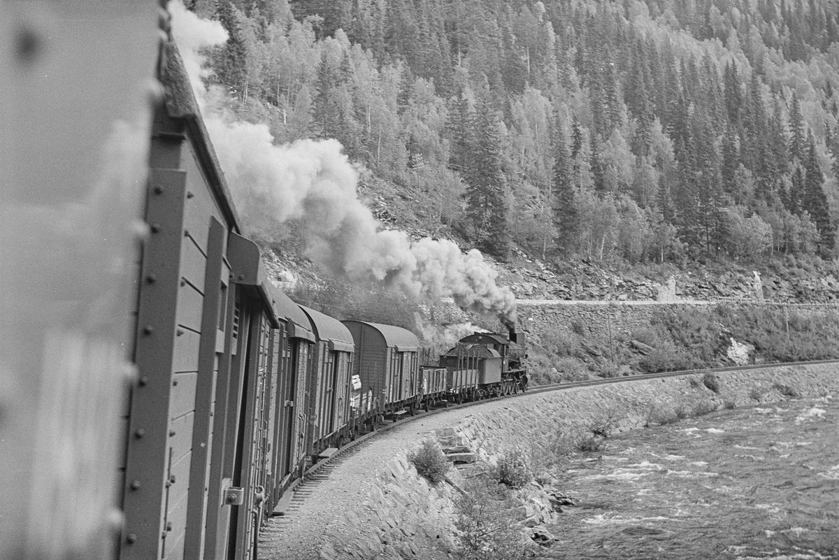 """Underveisgodstog fra Trondheim til Hamar, tog 5712 i den såkalte """"Krokkurven"""" mellom Langlete og Reitstøa stasjoner. Toget trekkes av damplokomotiv type 30b nr. 350."""
