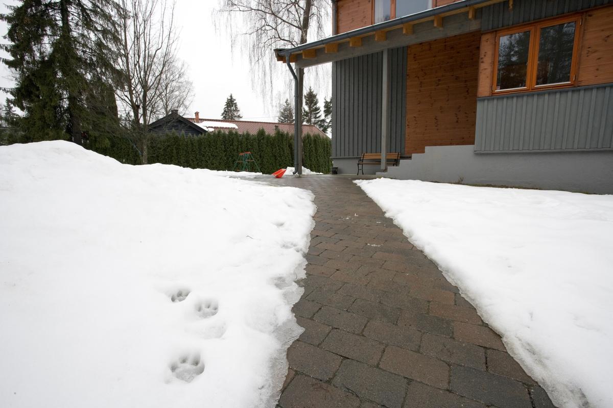Hunden Balders fotspor i hagen.