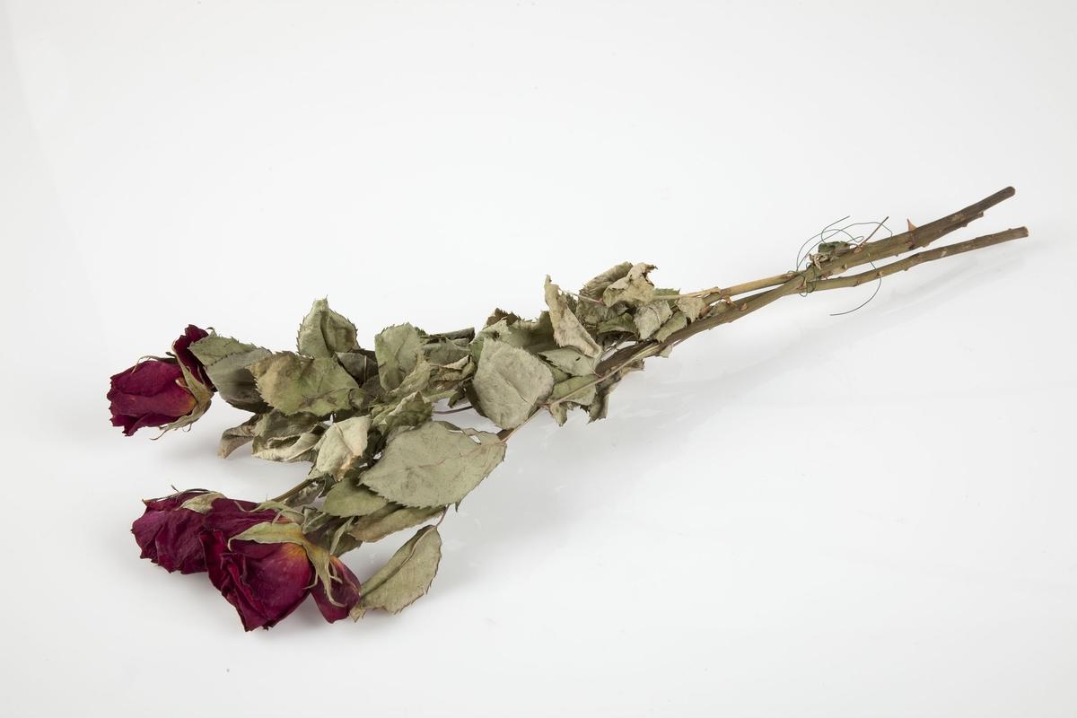 Rose innsamlet etter terrorhandlingen 22. juli 2011 fra minnesmarkeringene i Lillestrøm.   Tre røde roser med rikt bladverk, bundet sammen med en grønn metalltråd. Rosene har bevart en god rødfarge, antakelig nær opp til hva den hadde før den tørket. Tråden som holder rosene sammen sitter ganske langt nede på stilkene.