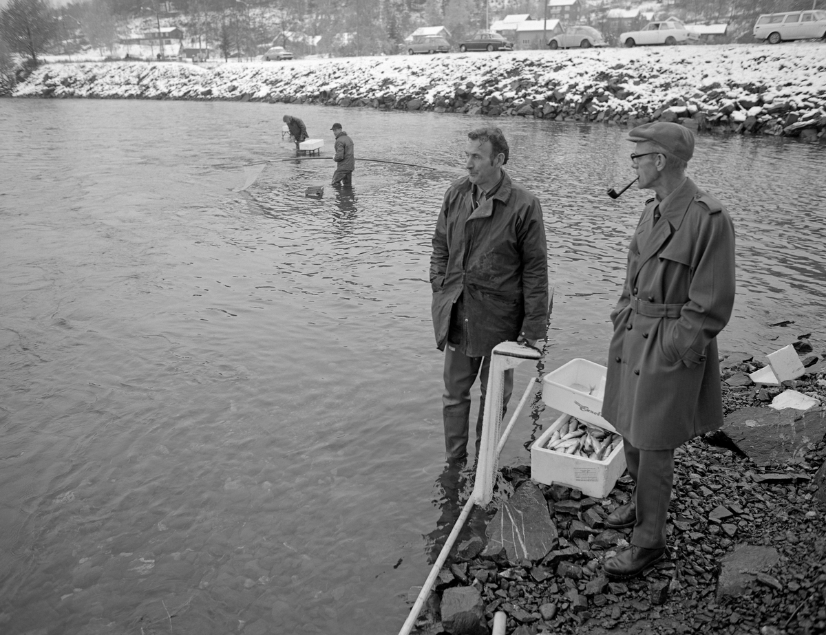 Grunnhåvfiske etter lågåsild (Coregonus albula) ved Rundtomodden i Fåberg høsten 1976.  I forgrunnen ser vi to menn i samtale ved ei isoporkasse med fisk ved elvebredden.  Den ene av dem (Olav Hammershaug) holdt en håv i handa.  I bakgrunnen skimter vi to andre håvfiskere i aktivitet fra posisjoner der de sto med vann til knærne.  En av dem hadde ei fiskekasse på et jernstativ bak seg.  Dermed slapp han gå inn til elvebredden hver gang han hadde fanget lågåsild med håven.    Grunnhåven var et enmannsredskap som ble brukt fra elvebredden til fangst av fisk som var på gytevandring oppover den nedre delen av Gudbrandsdalslågen hver høst, fortrinnsvis på steder der det var strømmende, forholdsvis grunt vann.  Skaftet på denne håvtypen – «rauna» – var vanligvis mellom fire og seks meter langt.  Dette måtte til når en ville fange fisk fra land på et par meters djup.  «Håvhugget» eller «håvringen» var lagd av grankvister som var bøyd mot hverandre og bundet i hop, slik at de dannet en avlang ring (70-80 centimeter lang og om lag 40 centimeter bred).  Til dette håvhugguet var det festet en «påsa» eller «bunding» av finmasket lin- eller bomullstråd.  Påsa'n ble festet til håvringen med lærreimer.  Disse reimene bidro også til å beskytte trådfibrene mot slitasje når redskapet ble ført langs den steinete elvebotnen.  Et håvdrette startet med at fiskeren stakk grunnhåven ned i elvevatnet så langt de nådde på motstrøms side og førte den i medstrøms retning, noe raskere enn strømhastigheten, slik at påsa'n hele tida stod utspent på motstrøms side av håvhugguet.  Når håven hadde kommet så langt fiskeren og skaftet nådde på medstrøms side vred han rauna, slik at fangståpningen vendte oppover, slik at eventuell fanget lågåsild ikke kunne unnslippe.  Så løftes håven opp av vannet.  Dersom det var fisk i påsa'n ble den tatt i land og tømt – «skrullet» - i ei bøtte, en «sildesnik» av flettverk eller ei kasse.