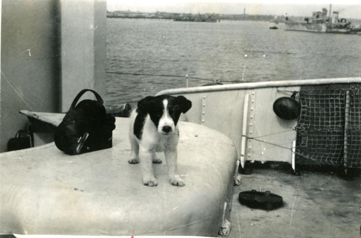 """Album Glaisdale H.Nor.M.S. """"Glaisdale"""". Fotograf: Ltn.Knudtzon. Skipets hund. ."""