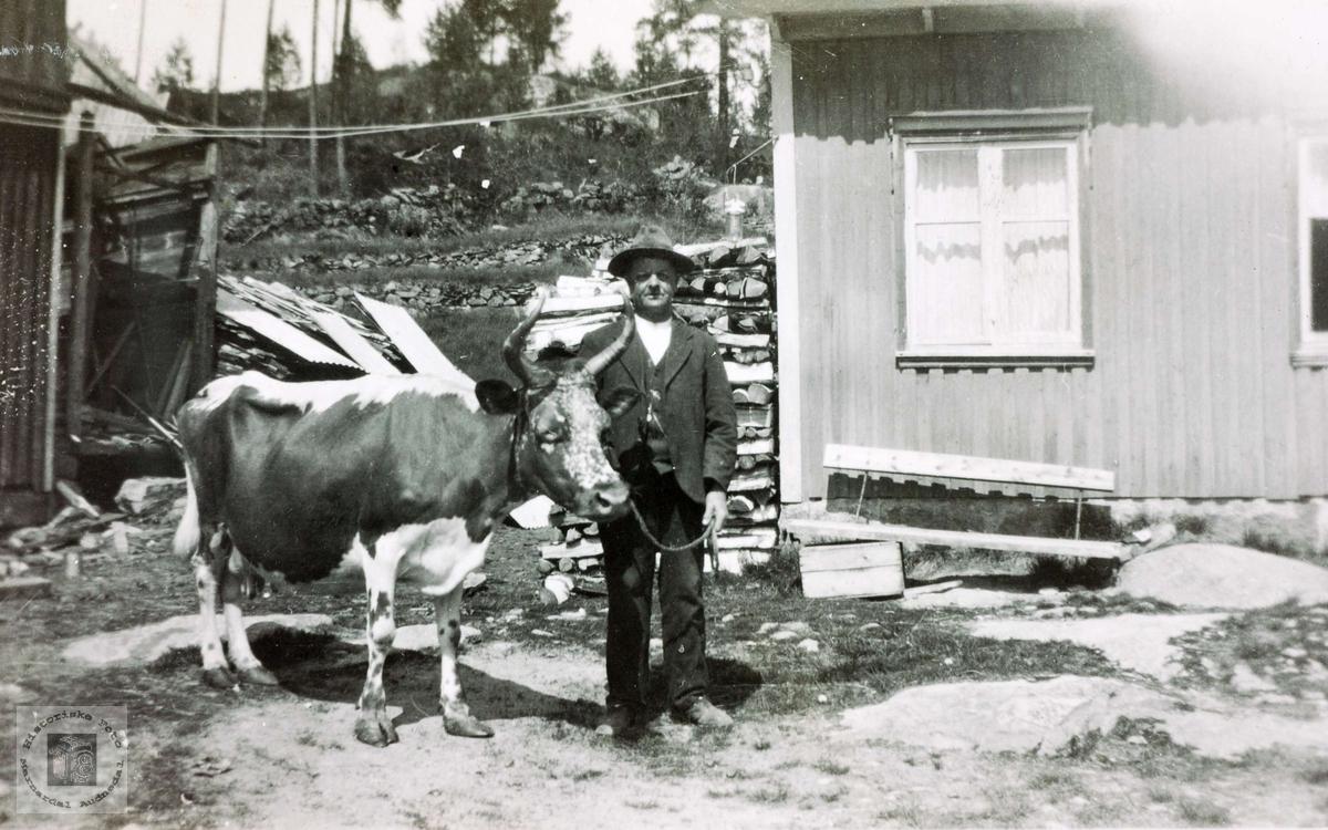 "Lisle-Jo med kua ""O, lue"" på Sveindal. Grindheim Audnedal."