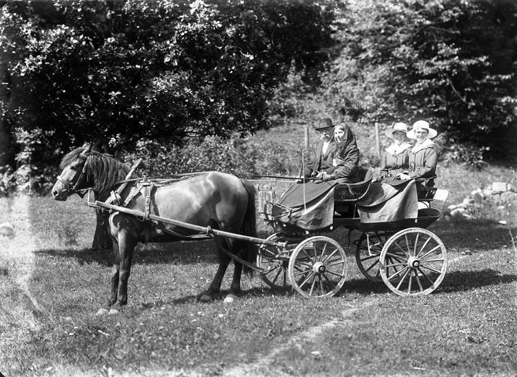 """Enligt fotografens noteringar: """"Häst för vagn."""""""