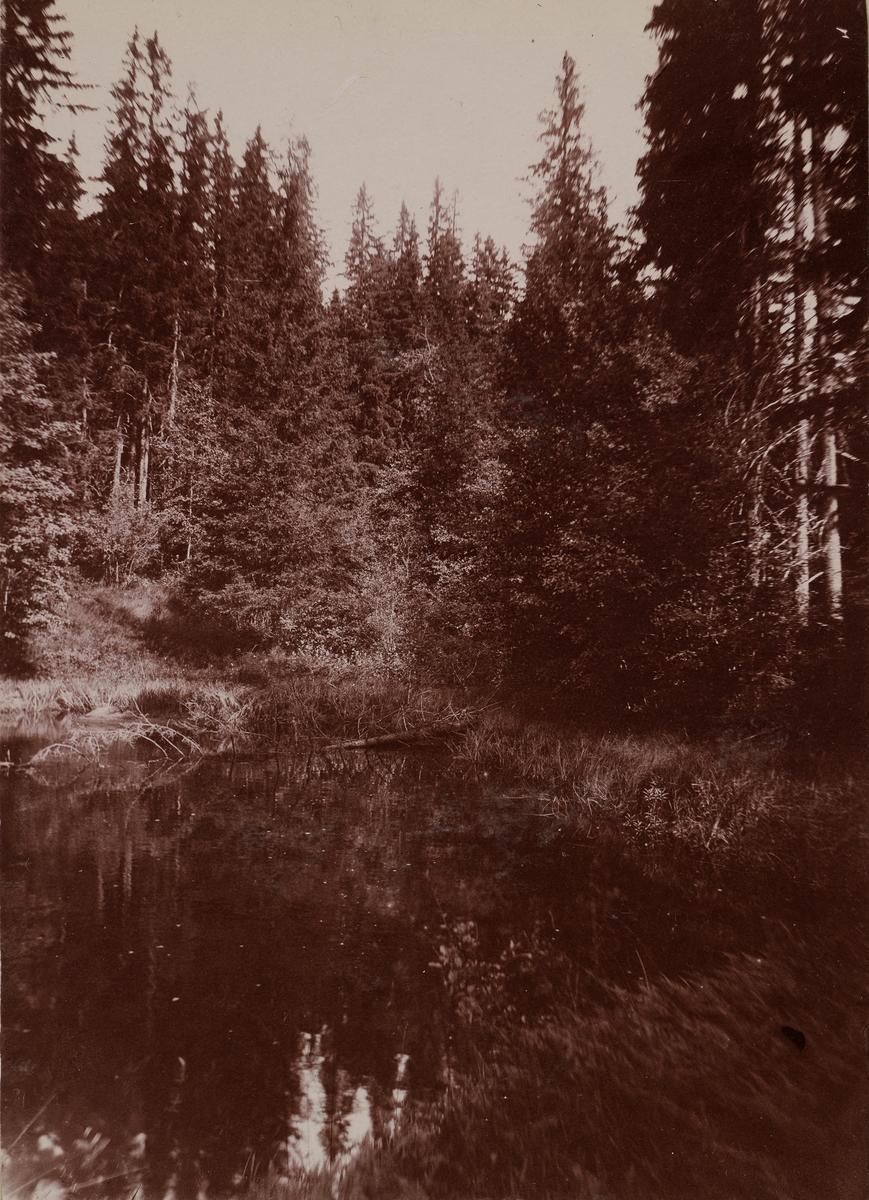 Et skogstjern.