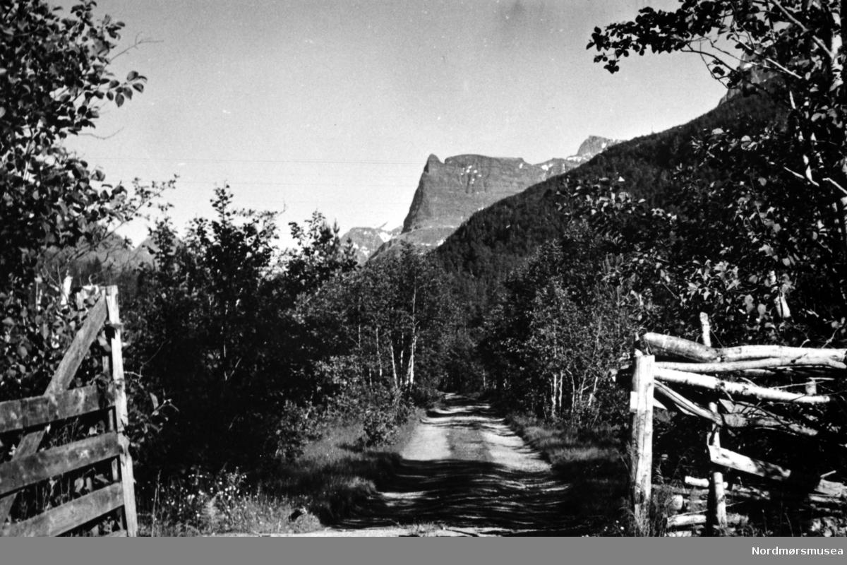 Foto fra Dalsbø, Virumdalen, ser inn mot Innerdalstårnet. Sunndal kommune. (Info fra Ole Erik Loe 2017) -  en smal landevei leder innover mot skogen og fjellene. Likeså er fotograf og datering, men fotograf kan være Georg Sverdrup og datering kan være fra perioden 1930 til 1939. Fra Nordmøre Museums fotosamlinger.