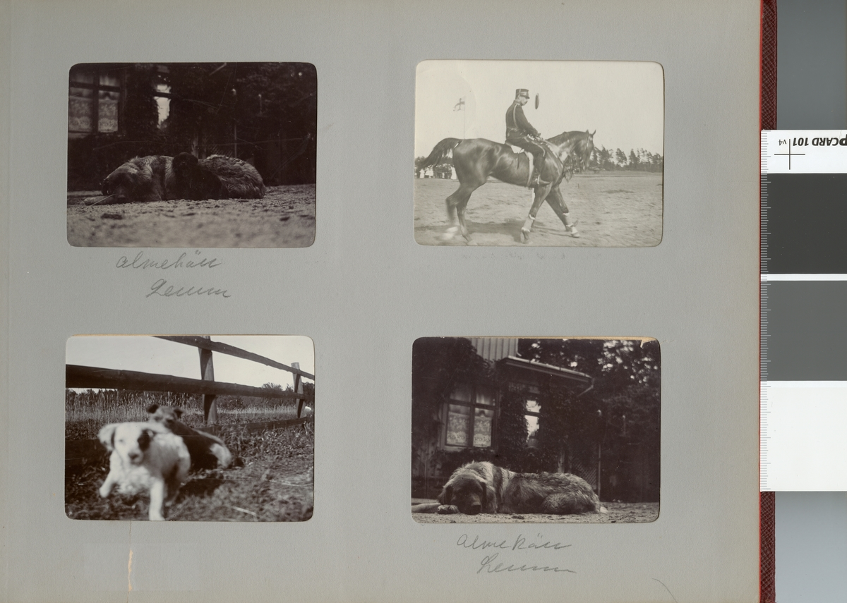 Hundarna Almekäll och Leune(?)