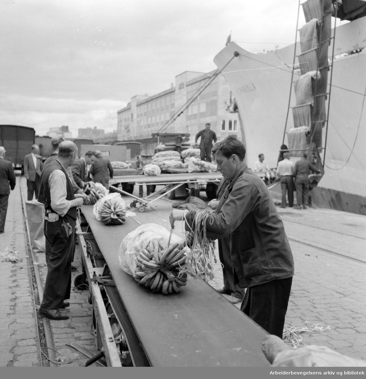 Havna. Bryggearbeidere, lasting og lossing. Lossing av bananer på samlebånd. Juli 1957.