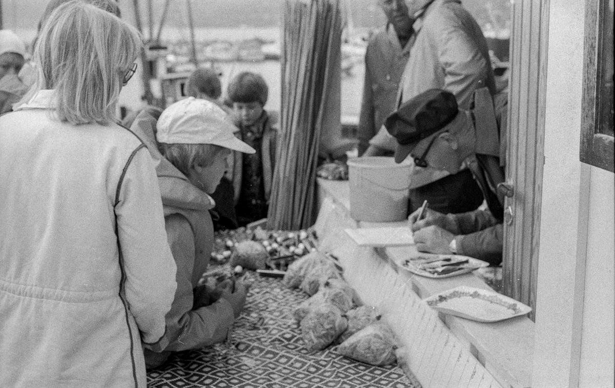Fiskekonkurranse på Drøbak brygge i båthavna. 3 gutter med fiskestenger.