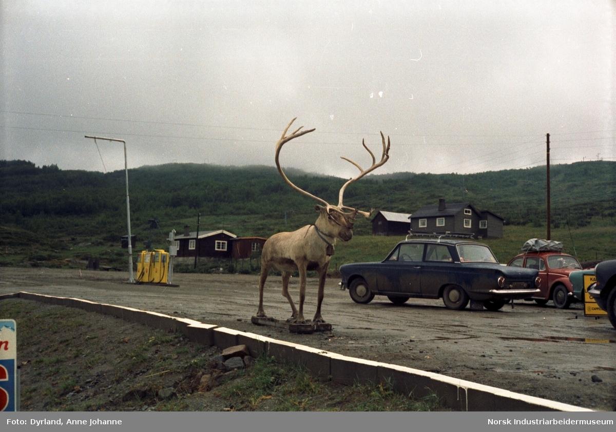 Tur til Røros. Biler parkert på bensinstasjon ved siden av reinsdyrskulptur. Hytter i bakgrunn