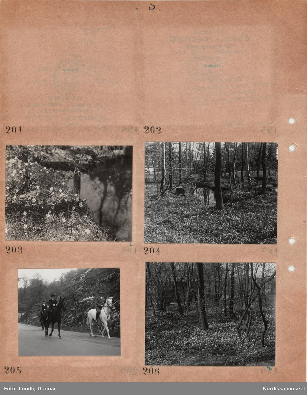 Motiv: Dag - Sthlm (Stockholm), Djurgården div 188 - 202, Djurgårdsmotiv, träd, etc 203 - 210 ; Blommor vid en bäck, en skog med en bäck, kvinnor och män rider på en väg, blommor i en skog.
