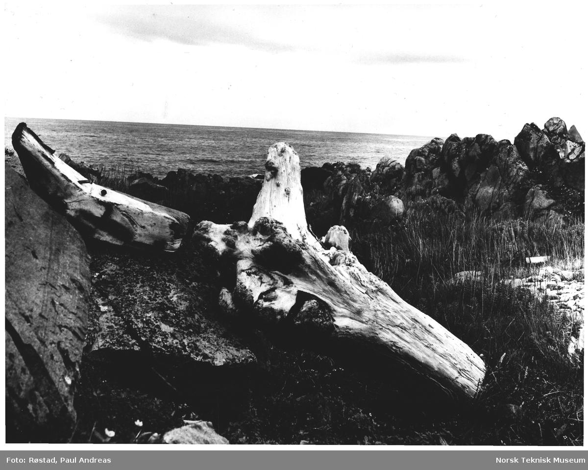 Drivgods - Ishavskysten øst for Berlevåg