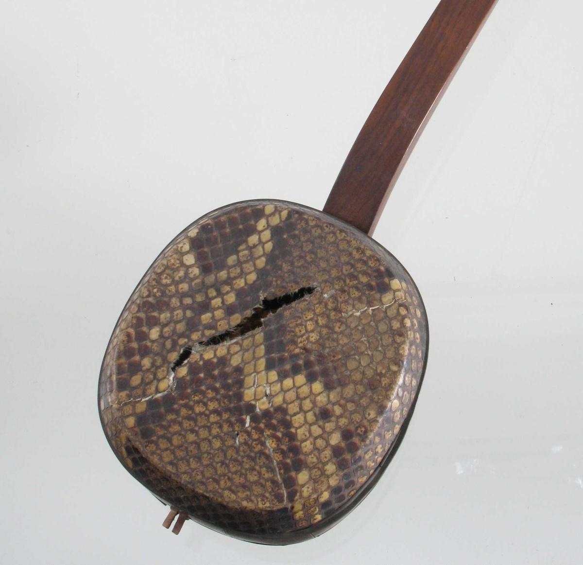 Tre,  Krokodilleskinn. Selve kassen forholdsvis liten sammenlignet med skaftet. Kassens bunn  og lokk av krokodilleskinn.   Strengeinstrument.