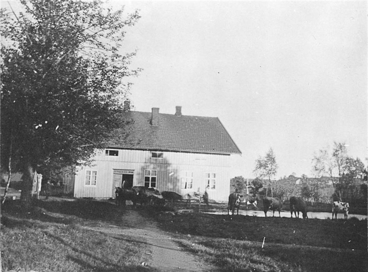 Våningshus med to hester stående foran inngangsdøren. Fem kyr står ved dammen like ved.