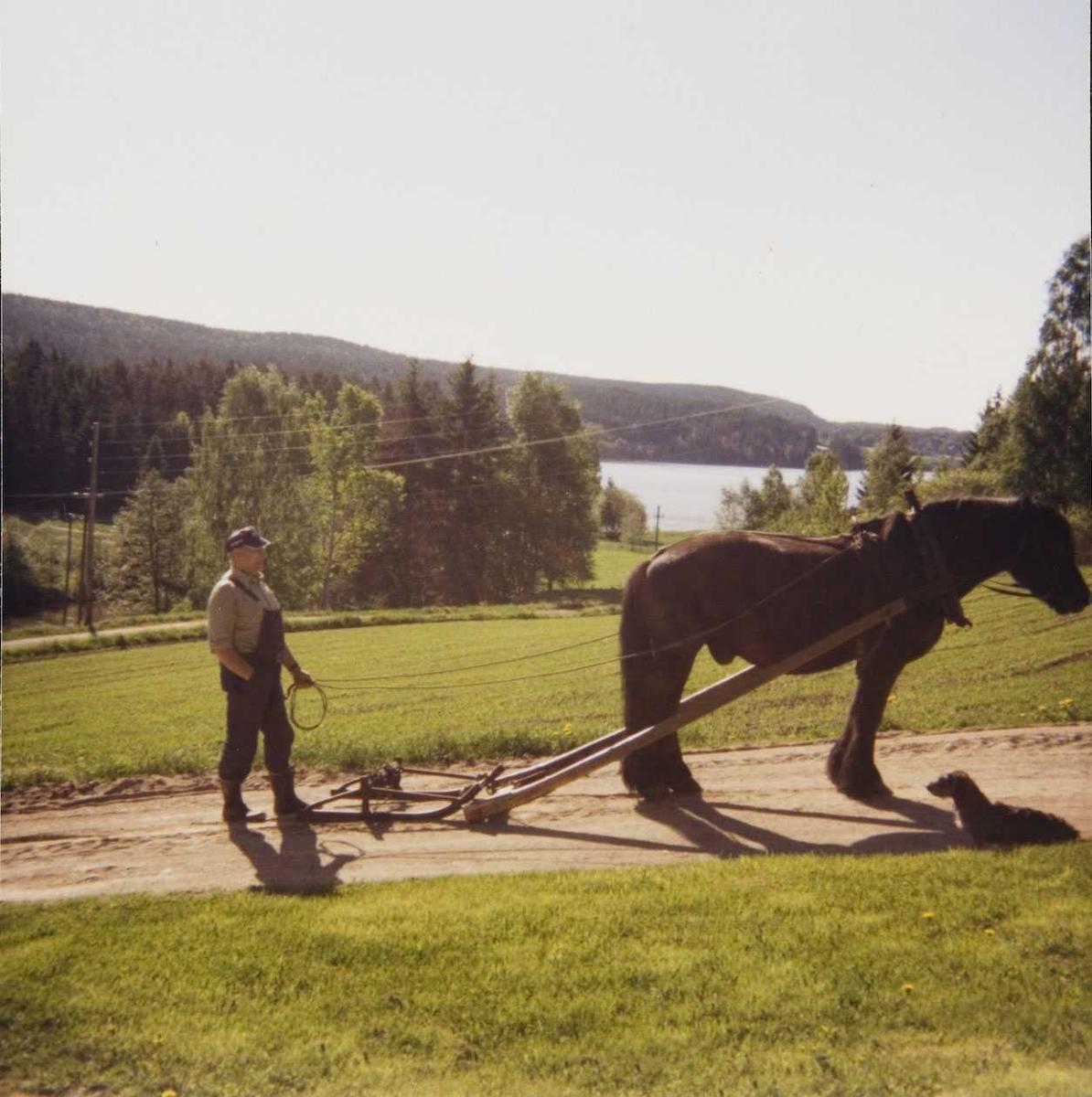 Hest og stutting