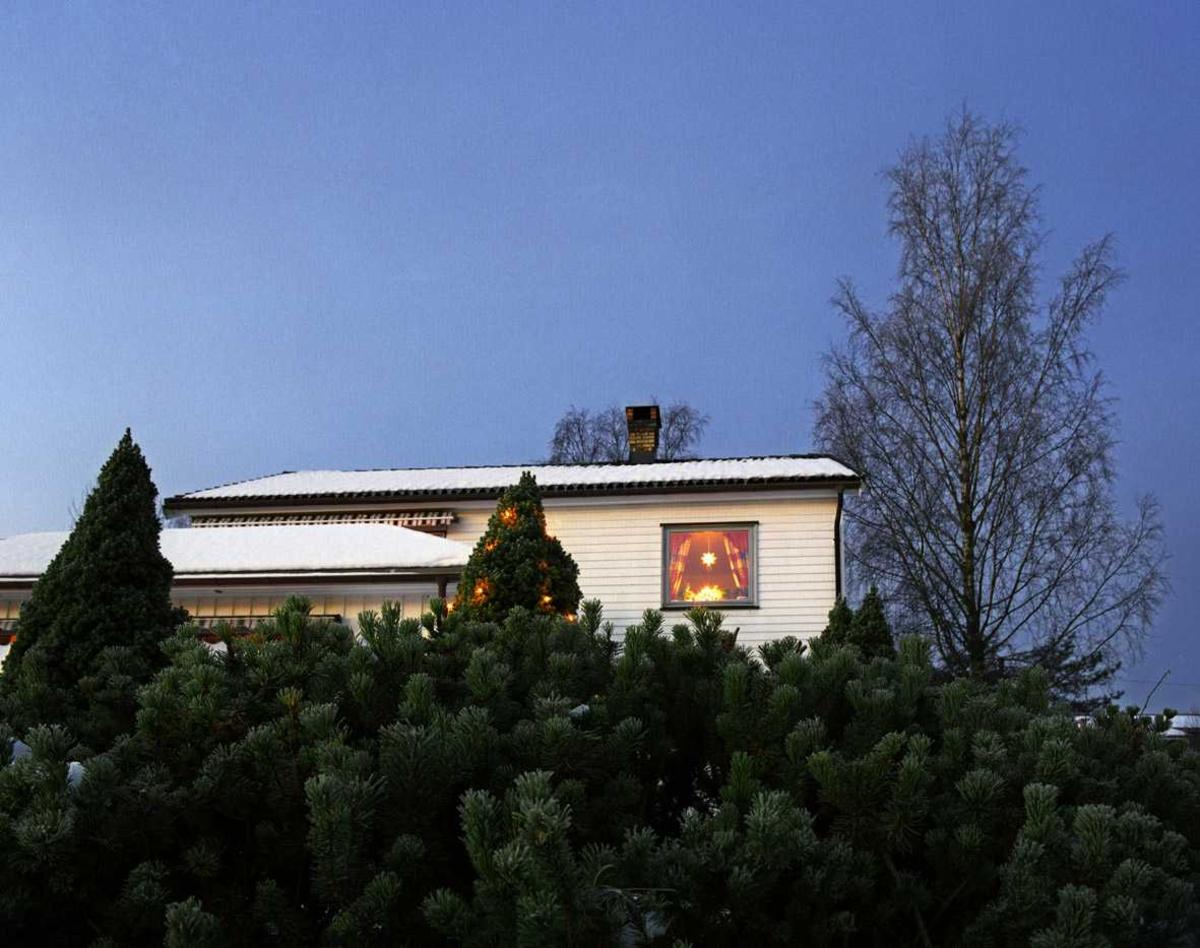 Julebelysning  Hvit julebelysning på tujaer og lysende stjerne i vindu i enebolig