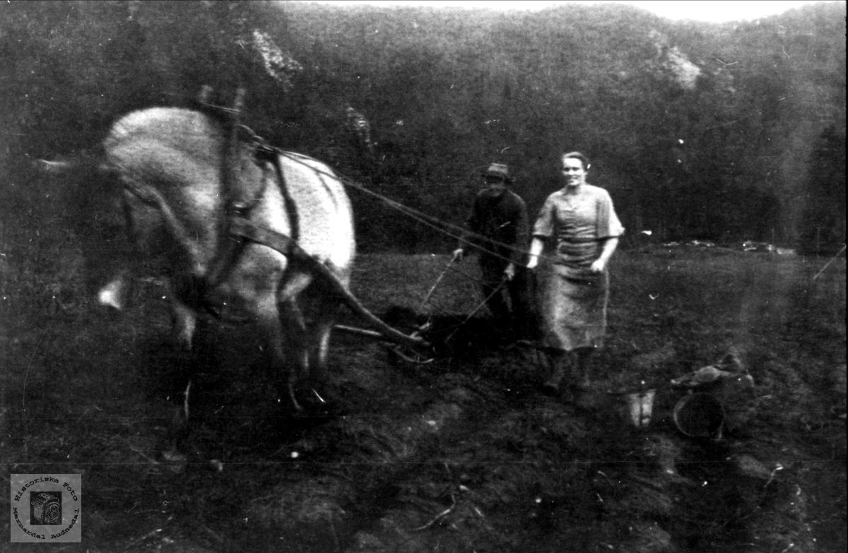 Pløying med hest, Trygsland Bjelland.